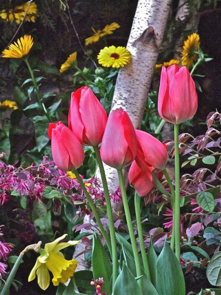 Photograph - Red Tulips by Janis Nussbaum Senungetuk