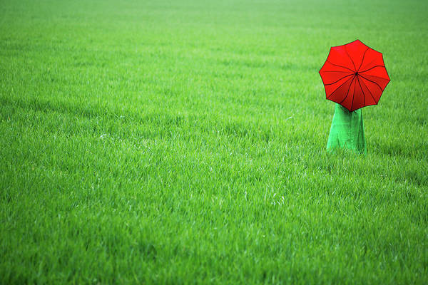 Photograph - Red Umbrella In Green Field by Maggie McCall