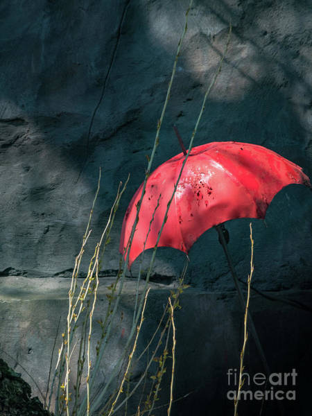 Photograph - Red Umbrella by Robin Zygelman