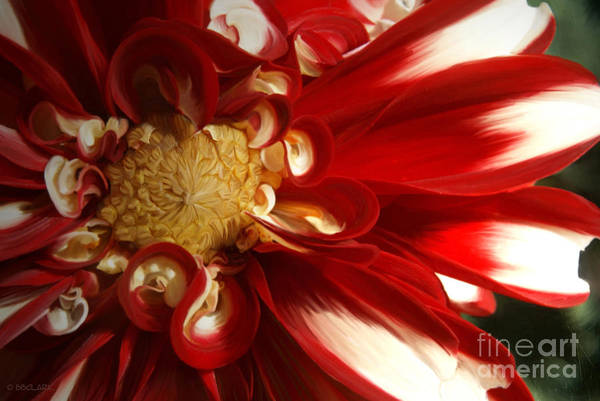 Painting - Red Velvet by Beve Brown-Clark Photography
