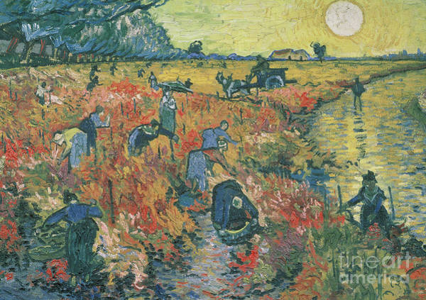 Wall Art - Painting - Red Vineyards At Arles by Vincent van Gogh