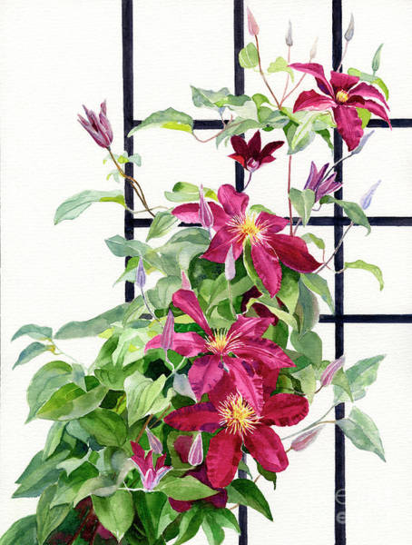 Clematis Wall Art - Painting - Red Violet Clematis On A Trellis by Sharon Freeman