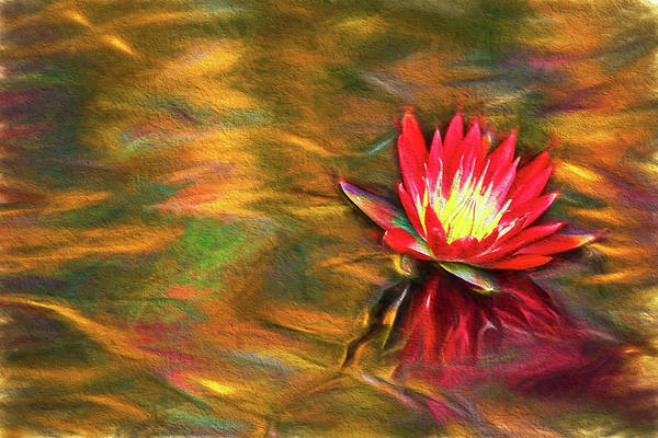 Photograph - Red Waterlily Ripples by Kay Brewer