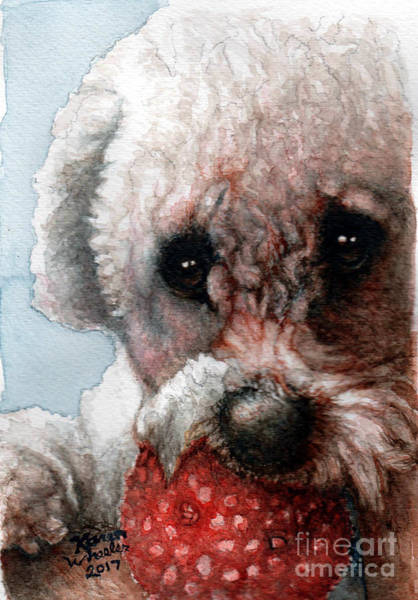 Maltipoo Wall Art - Painting - Red, White And Bella by Karen Wheeler
