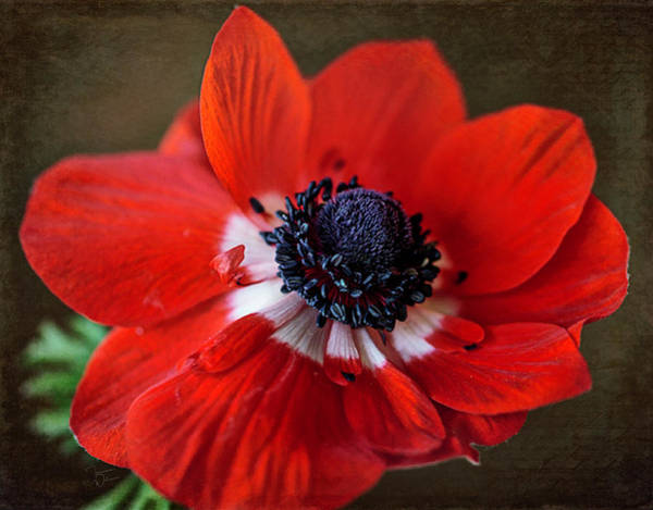 Photograph - Red White And Blue 2 by Teresa Wilson