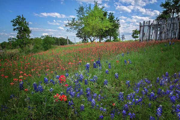 Photograph - Red White And Blue In The Hill Country by Lynn Bauer