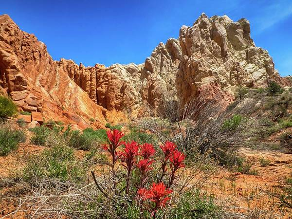 Desert Paintbrush Photograph - Red White And Blue by Rob Wilson