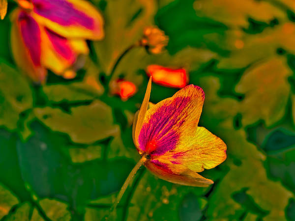 Photograph - Red, White, Green, Orange by Leif Sohlman