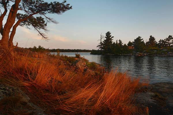 Photograph - Red Wild Grass Georgian Bay by Steve Somerville