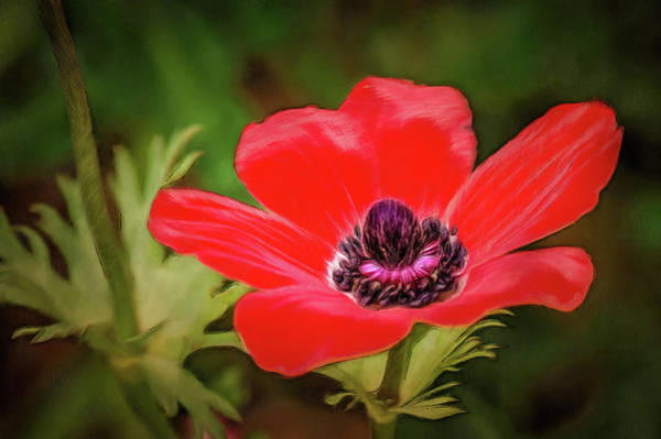 Digital Art - Red Wildflower Closeup by Michael Goyberg