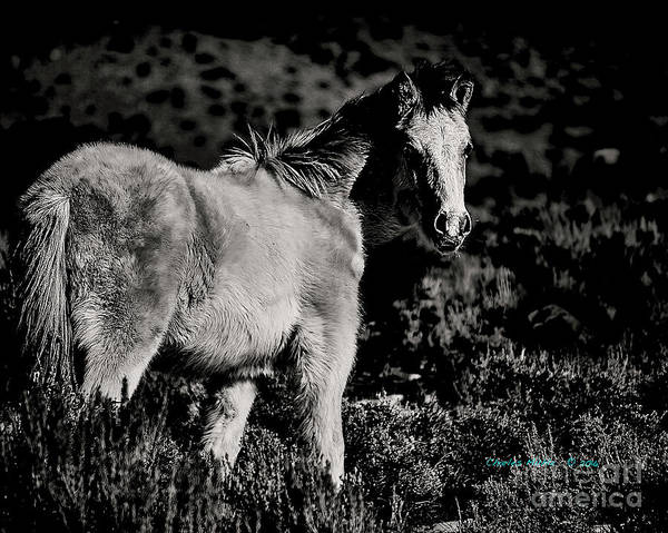 Photograph - Red Willow Pony V by Charles Muhle