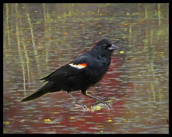 Digital Art - Red Winged Black Bird Perching by Rusty R Smith