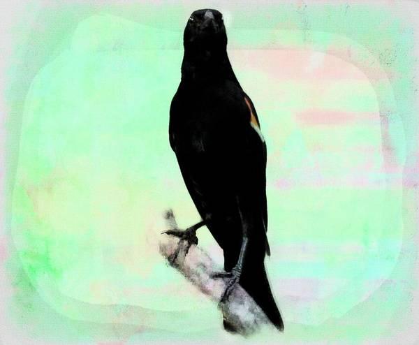 Digital Art - Red-winged Blackbird by Rusty R Smith