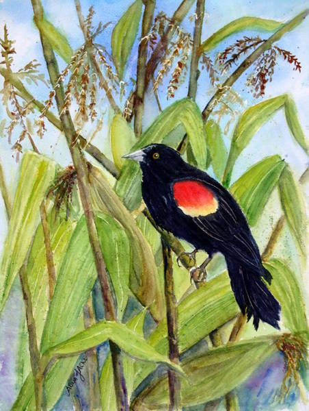 Painting - Red-winged Sentry by Anna Jacke