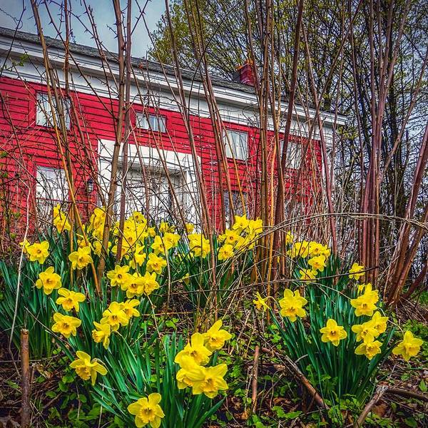 Photograph - Red. Yellow. Green.  by Kendall McKernon