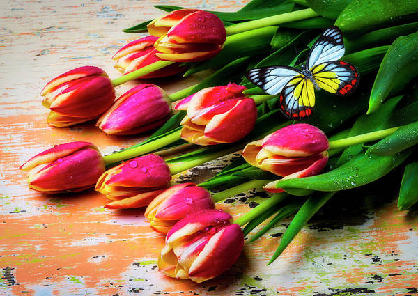 Photograph - Red Yellow Tulips With Gorgeous Butterfly by Garry Gay