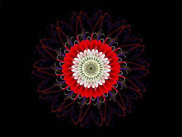 Digital Art - Red Zinnia by Barbara A Lane