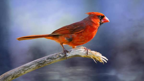 Wall Art - Photograph - Redbird Flash by Bill Tiepelman