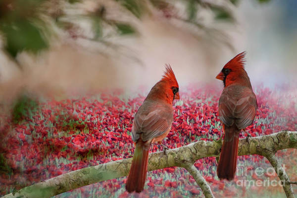 Chirping Photograph - Redbirds At Dusk by Bonnie Barry