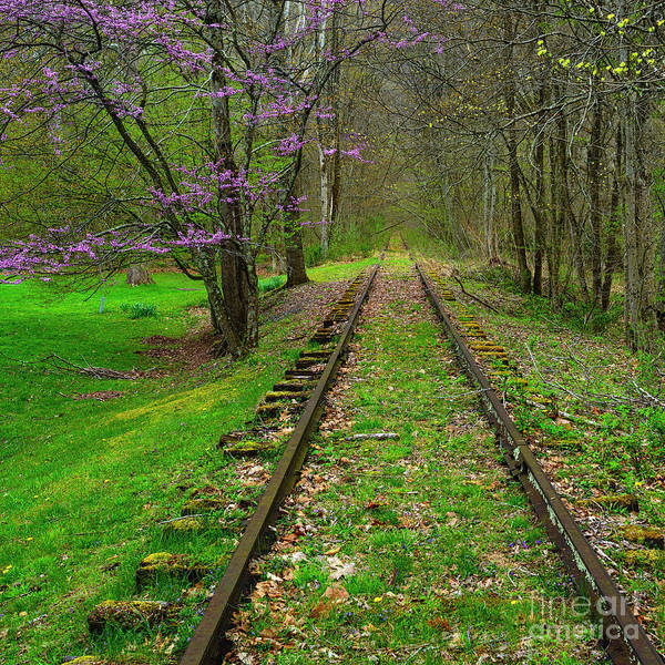 Photograph - Redbud And Abandoned Railroad by Thomas R Fletcher