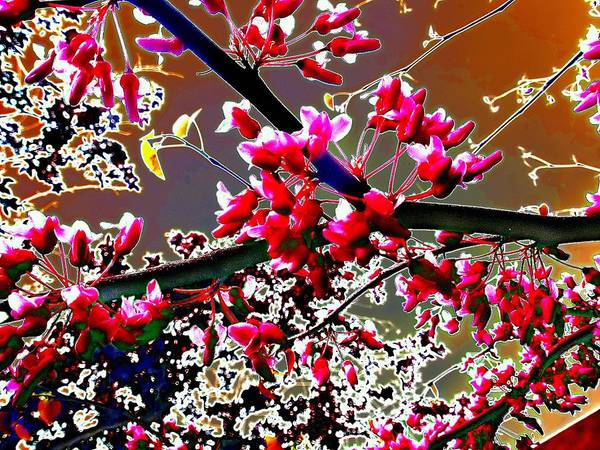 Photograph - Redbud Asian Adventure by Beth Akerman