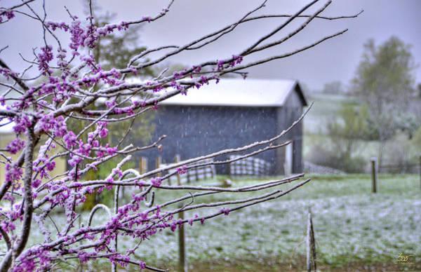 Photograph - Redbud Winter by Sam Davis Johnson