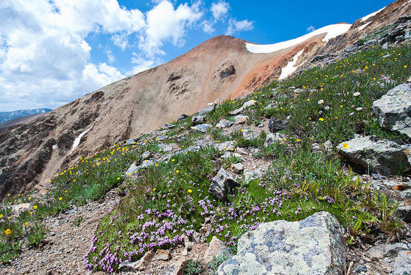 Photograph - Redcloud Peak And The Alpine by Cascade Colors