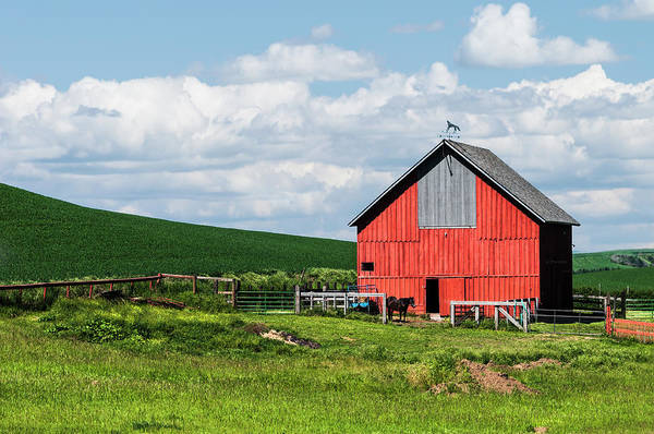 Photograph - Reddest Barn In Palouse. by Usha Peddamatham
