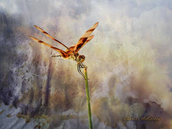 Photograph - Reddish Dragonfly by Charles McKelroy