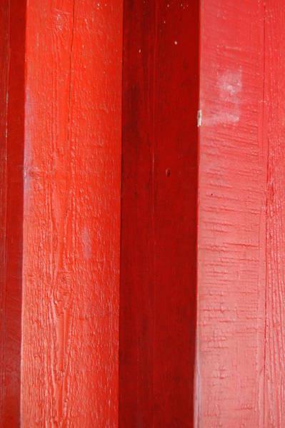 Photograph - Redwood 1 by Michael Raiman