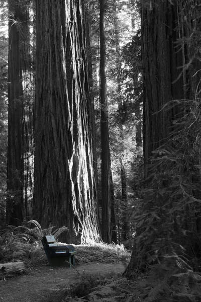 Photograph - Redwood Bench by Dylan Punke