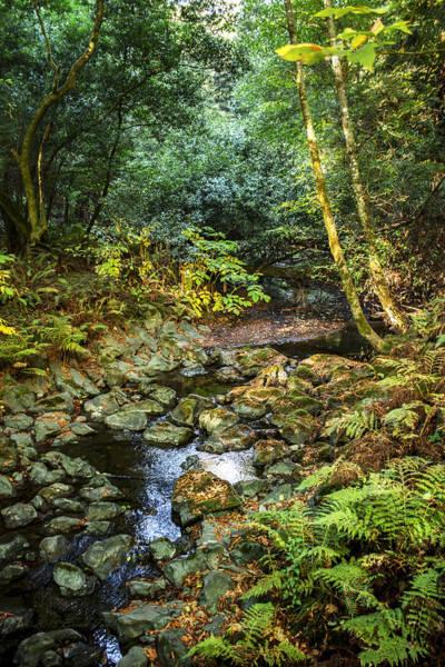 Photograph - Redwood Creek Autumn At Muir Woods by Brian Tada