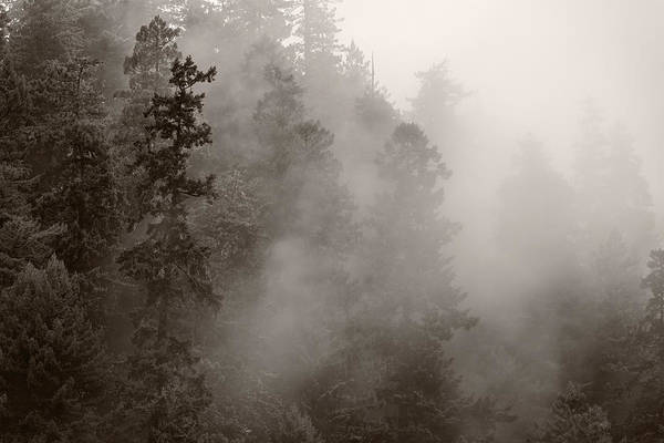 Wall Art - Photograph - Redwood Forest Atmospherics by Steve Gadomski