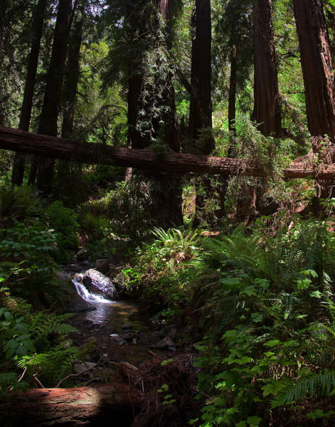 Wall Art - Photograph - Redwood Forest Peace by Patrick  Flynn