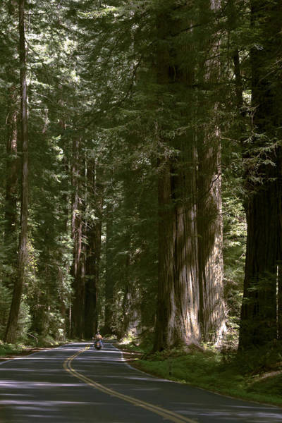 Redwood Highway Art Print