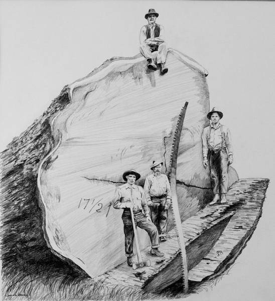 Lumberjacks Drawing - Redwood Loggers by James Deady