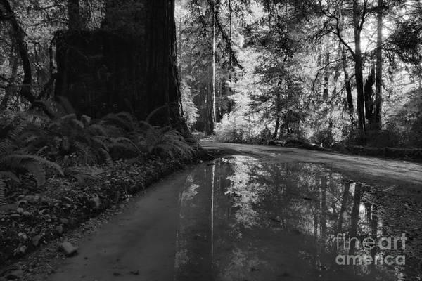 Photograph - Redwood Reflections Black And White Landscape by Adam Jewell