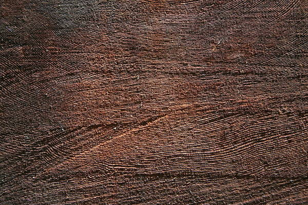 Photograph - Redwood Saw Marks by Dylan Punke