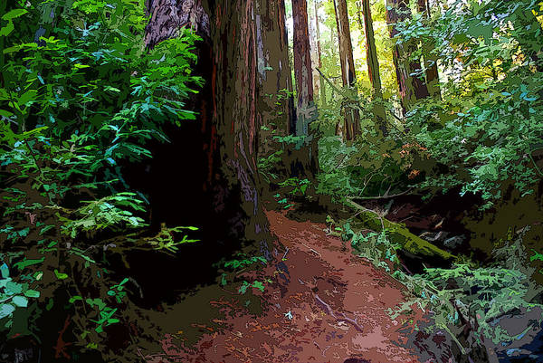 Digital Art - Redwood Trail By Creek On Mt. Tamalpais Enhanced by Ben Upham III