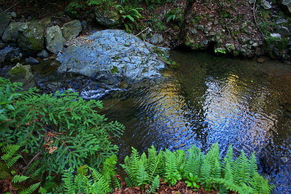 Photograph - Redwoods And Ferns On The Creek by Ben Upham III