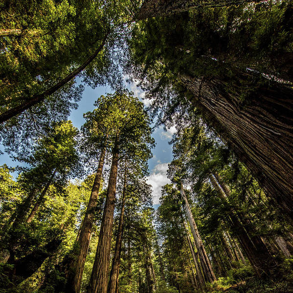 Wall Art - Photograph - Redwoods by Paul Freidlund