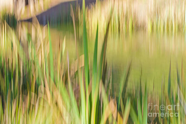 Photograph - Reed Abstract II by Kate Brown