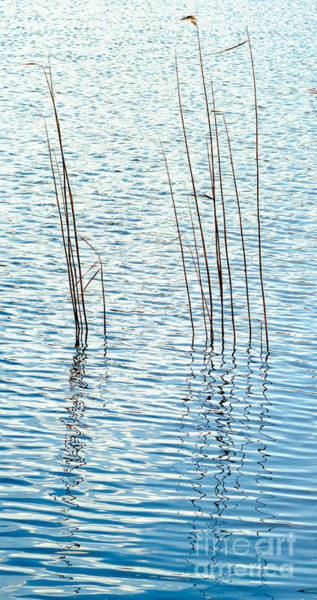 Photograph - Reeds And Reflections by Colin Rayner