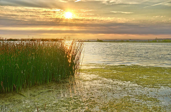 Reeds In The Sunset Art Print