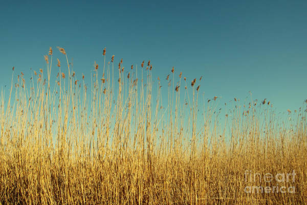 Photograph - Reeds Lake by Dimitar Hristov