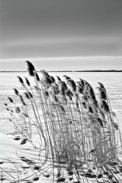 Photograph - Reeds On A Frozen Lake by Peter Pauer