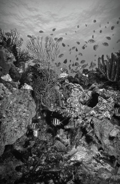 Photograph - Reef In Black And White by Debra and Dave Vanderlaan