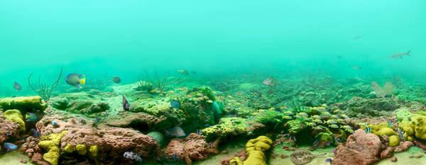 Reef Diving Digital Art - Reef Life by Owen Caddy