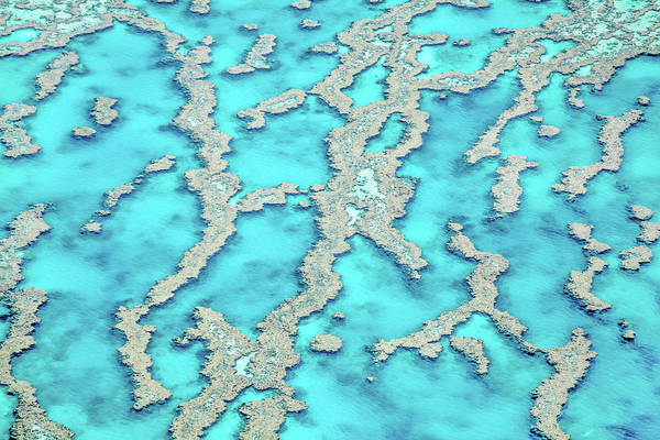 Photograph - Reef Patterns by Az Jackson