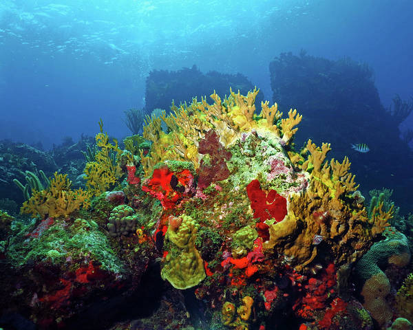 Photograph - Reef Scene With Divers Bubbles by Pauline Walsh Jacobson